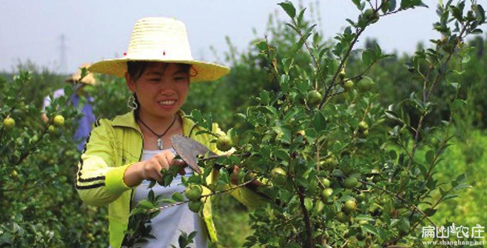 泸州红花油茶合作社